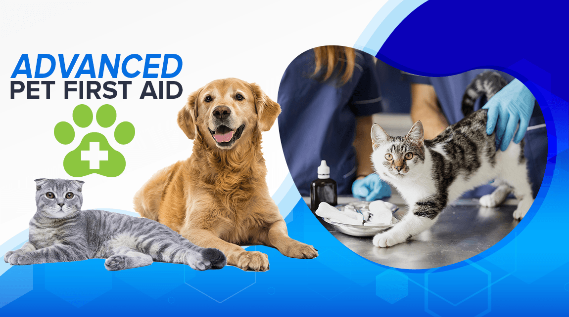 Advanced Pet First Aid – New Website